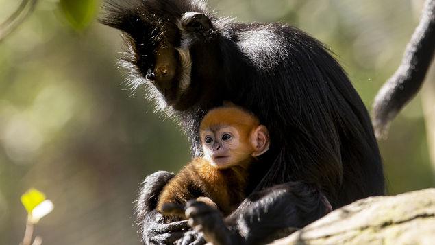 Mono raro