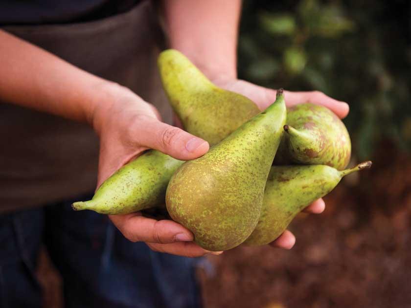 frutas oxidadas - peras