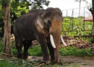 elefante Osama bin laden