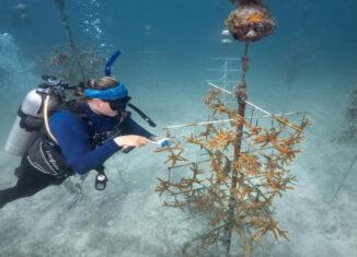 arrecifes la florida